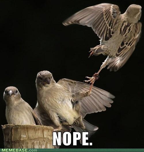 birds,nope