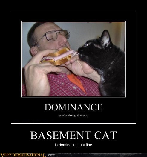 dominance,cat,sandwich