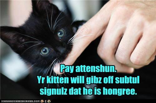 Cheezburger Image 7373026560