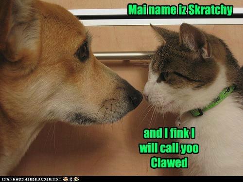 scratch puppy kitty