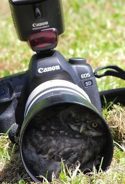 camera photobomber daily squee - 7373903104