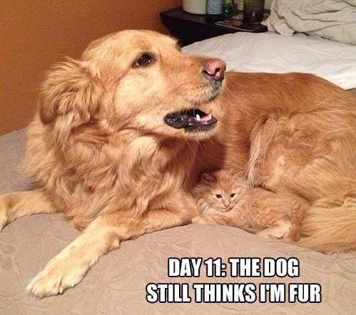 fur Cats disguise dogs