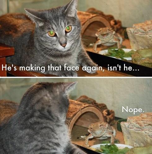 face lizard Cats - 7373984768
