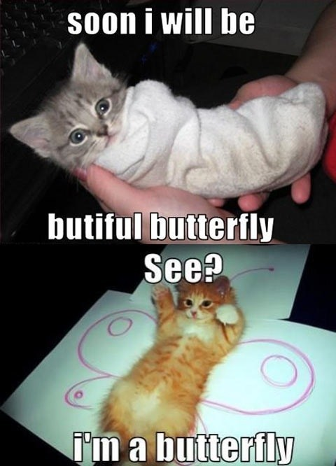 butterfly metamorphosis kitty Cats - 7374333696