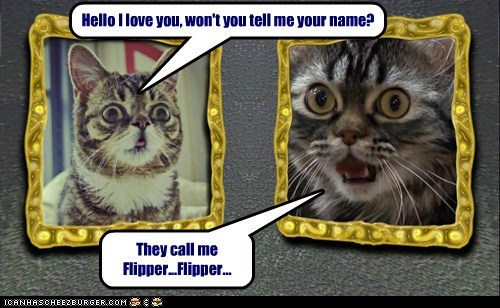 Separated at Birth? Hello I love you, won't you tell me your name? They call me Flipper...Flipper...