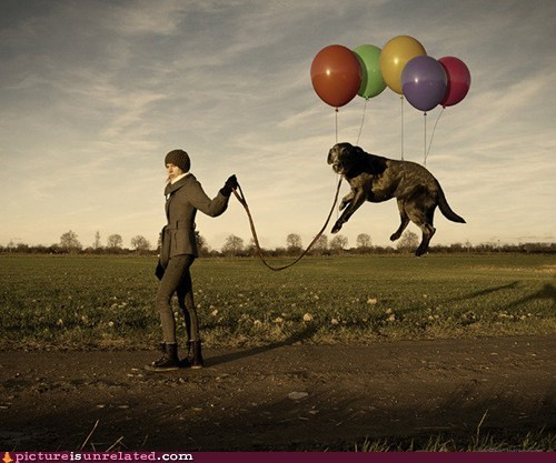 dogs wtf Balloons - 7374445312