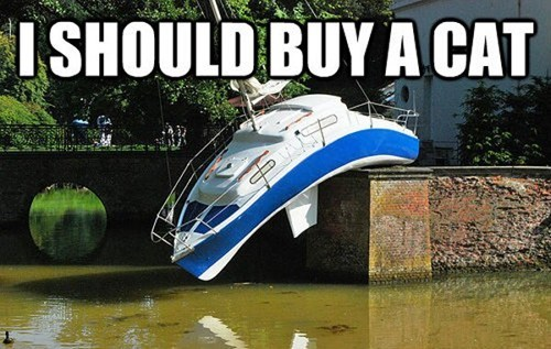 cat,i should buy a boat