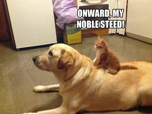go,onward noble steed
