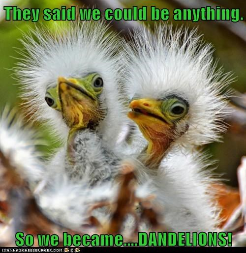 they said i could be anything birds dandelions