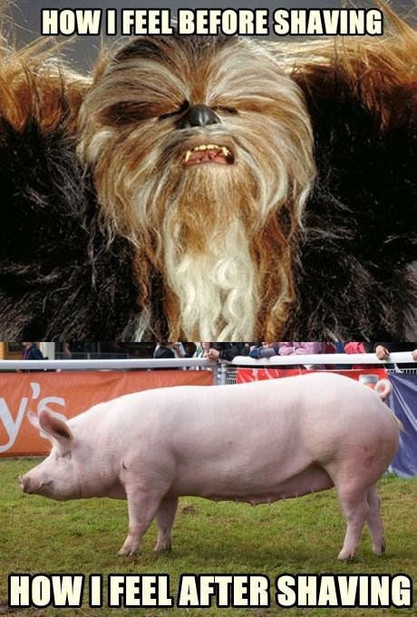 chewbacca,shaving,pig