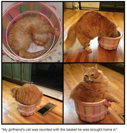 kitty basket - 7377100544