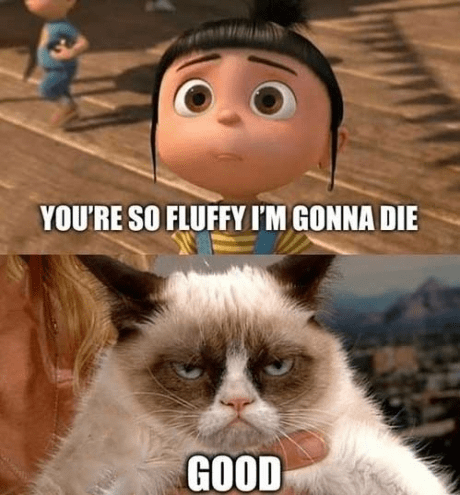 Grumpy Cat despicable me Death - 7377227008