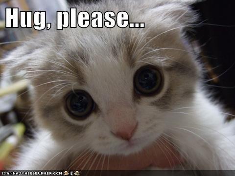 cute hugs kitty - 7377456384