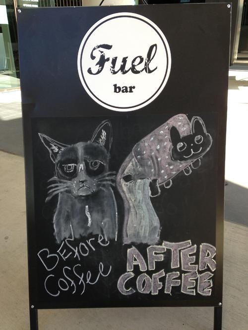 Grumpy Cat signs Nyan Cat coffee monday thru friday g rated
