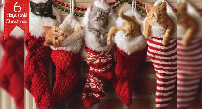 Cute cats | cats in Christmas stockings