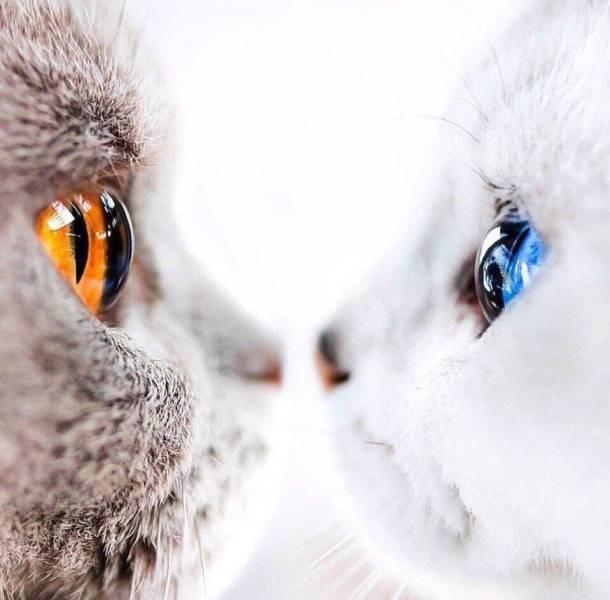 animal photos amazing photos amazing - 7378437