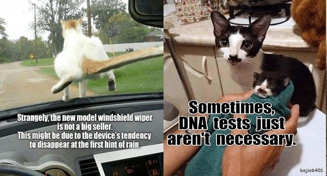 funny cat memes lolcats funny memes Memes funny cats Cats funny cat memes - 7378949