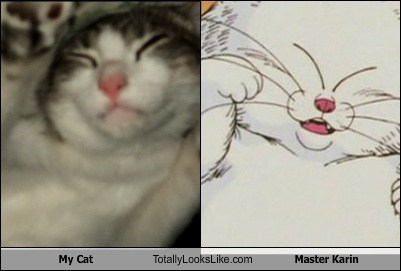 master karin,the eyes,anime,totally looks like,Cats
