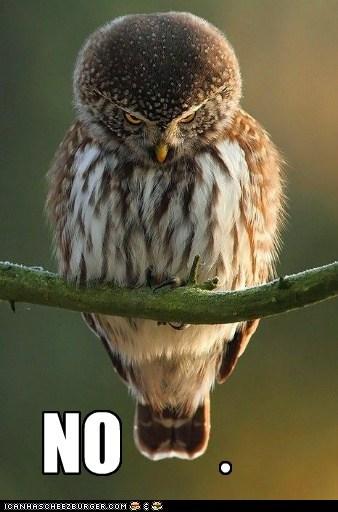 Owl,grumpy,no
