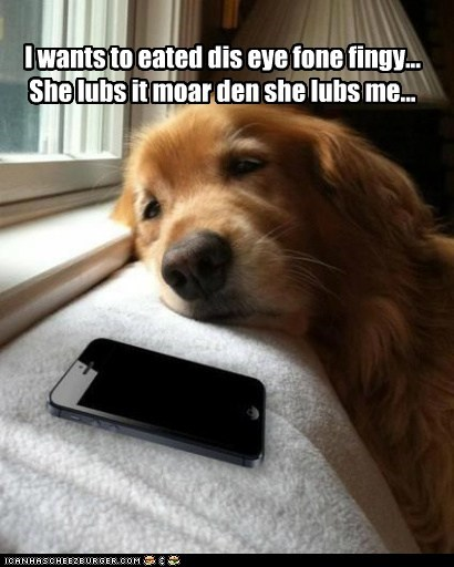 Cheezburger Image 7379623168