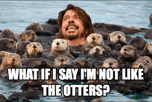 Dave Grohl otters foo fighters - 7379931136