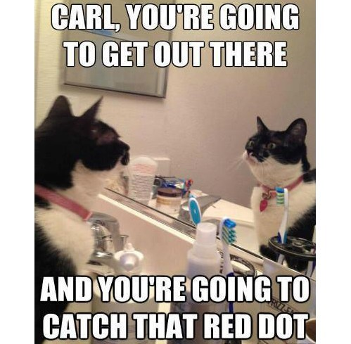 mirror,red dot,Cats