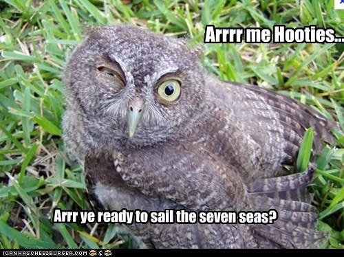 Pirate Owl arr - 7380061952