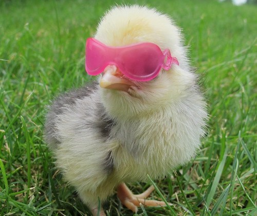 shades,Deal With It,chick