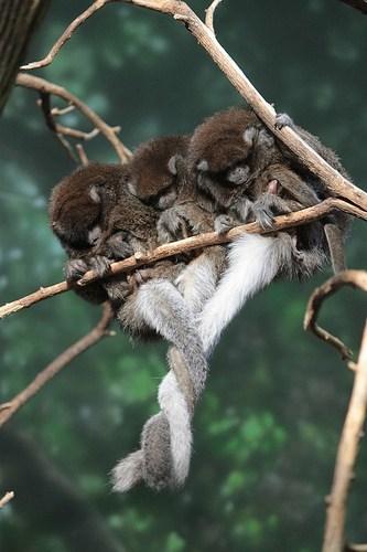 tails hug