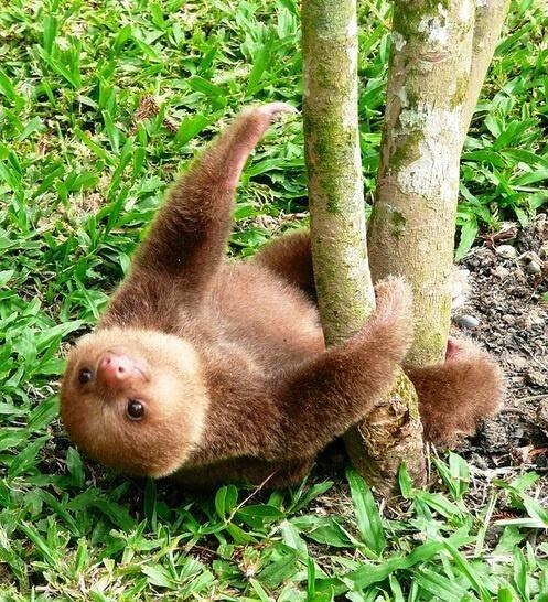 climb baby sloth - 7380342528