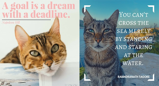 motivating cat quotes