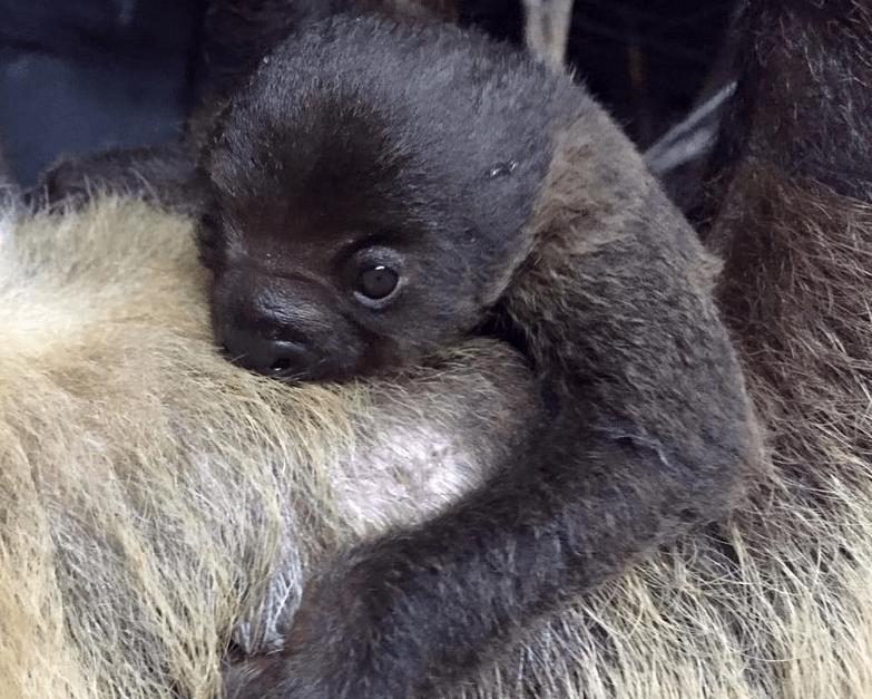baby,zoo,sloth