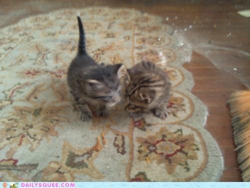 kitten - 7380629504