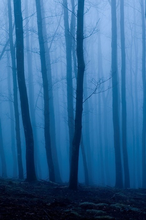 blue Forest landscape pretty colors - 7380730112