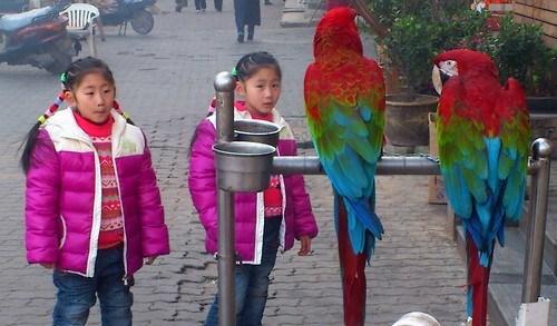 wtf,birds,kids,twins