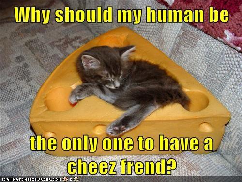 Cheezburger Image 7380963584
