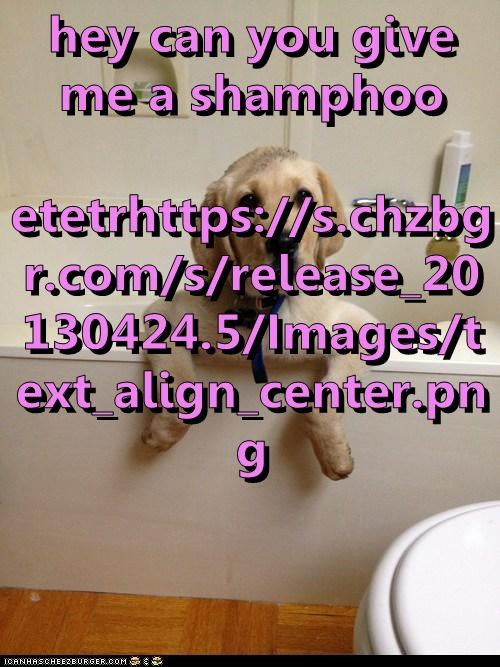 hey can you give me a shamphoo etetrhttps://s.chzbgr.com/s/release_20130424.5/Images/text_align_center.png