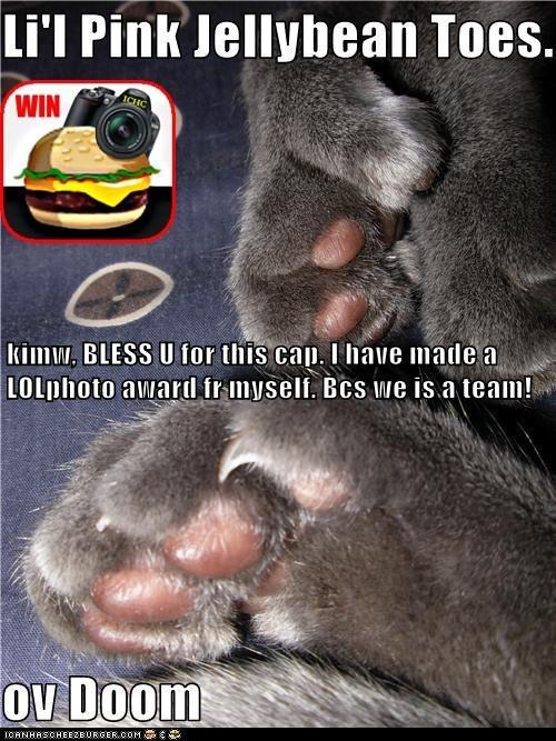 Cheezburger Image 7381791488