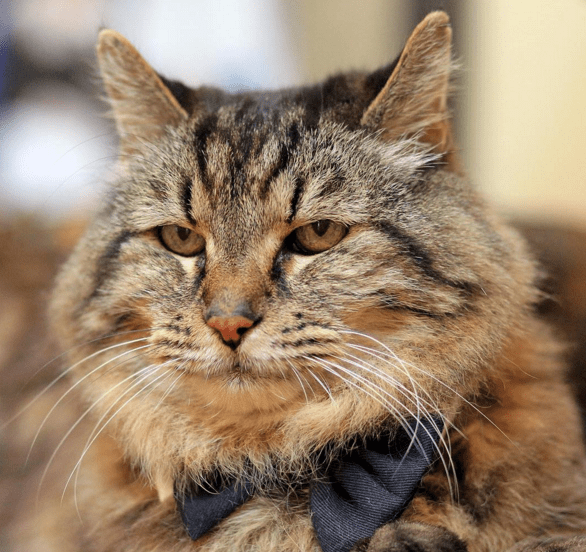 corduroy old Cats - 738309