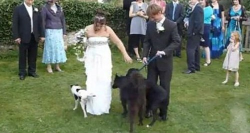 dogs brides weddings
