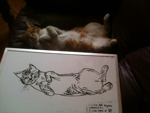 Draw Me Like One Of Your French Cats Lolcats Lol Cat Memes