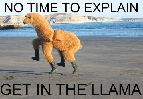 llama,clothes,dance,poorly dressed,g rated