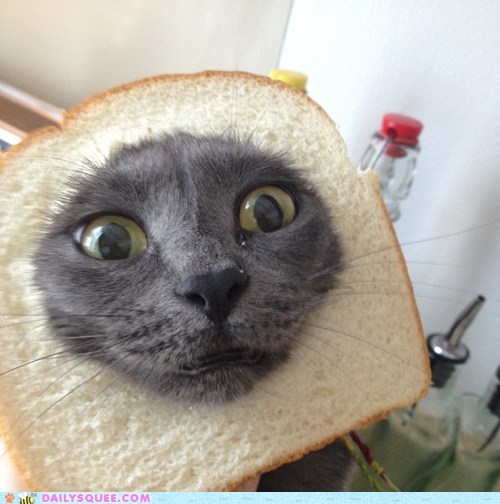 cat breading meme whole wheat