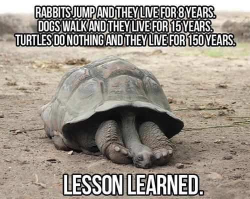lesson learned,turtles