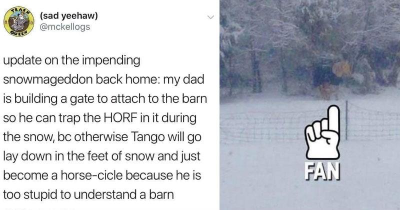 funny horse snowstorm