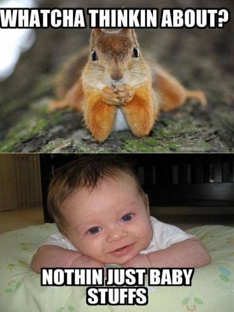megabloks squirrel whatcha thinkin about baby stuff - 7384082176