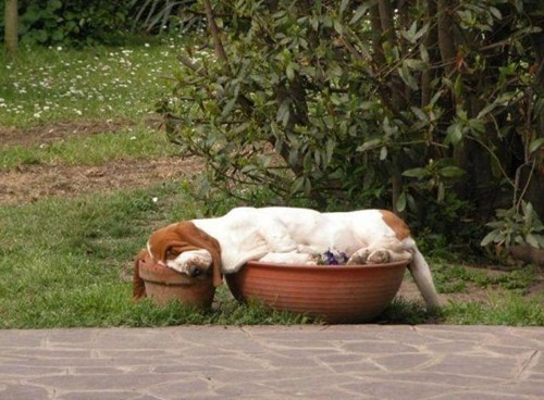 nap,flower bed,sleep,dogs