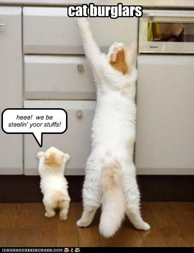 cat burglars
