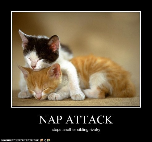NAP ATTACK stops another sibling rivalry