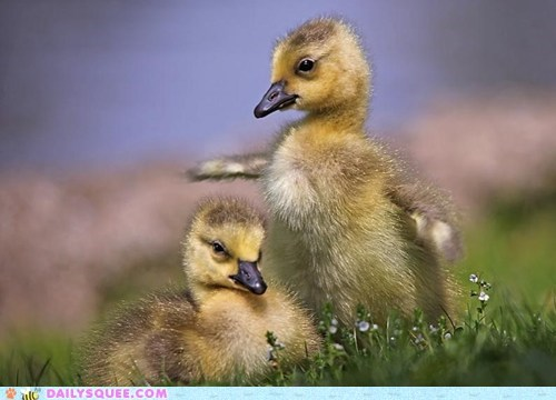 duckling,tall